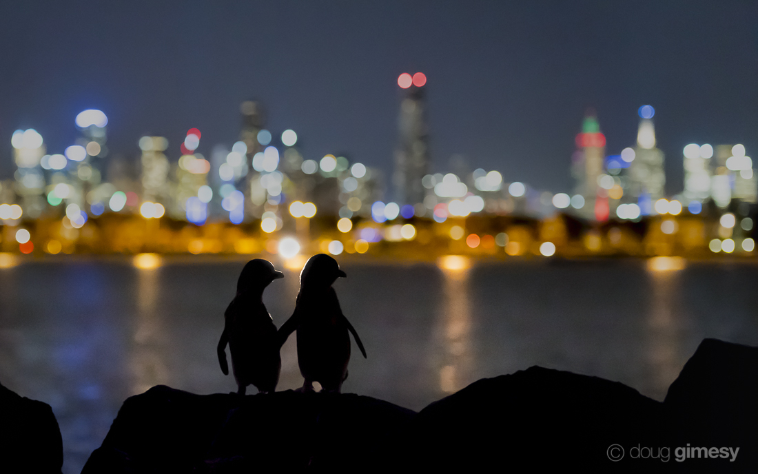 Small penguins, big city lights