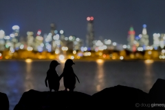 Small penguins, big city lights