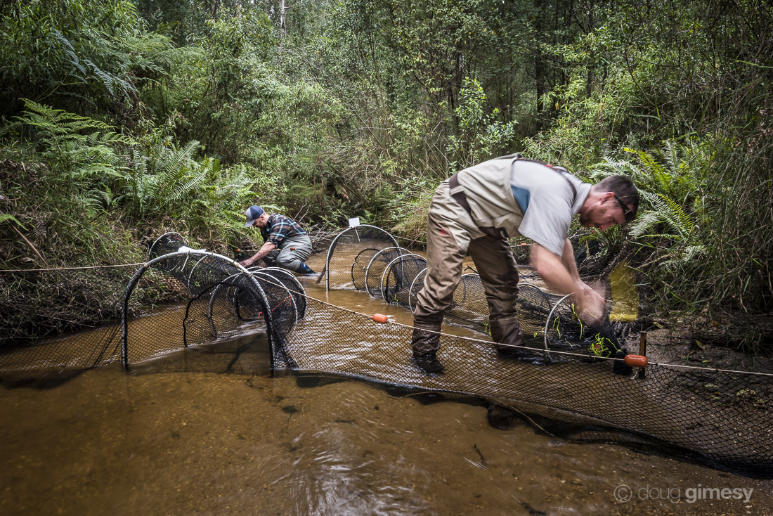 Setting up to capture - Upper Bunyip River, Victoria