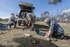 Getting ready to track - Dalgety, NSW